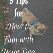 Tips for How to Run with Your Dog