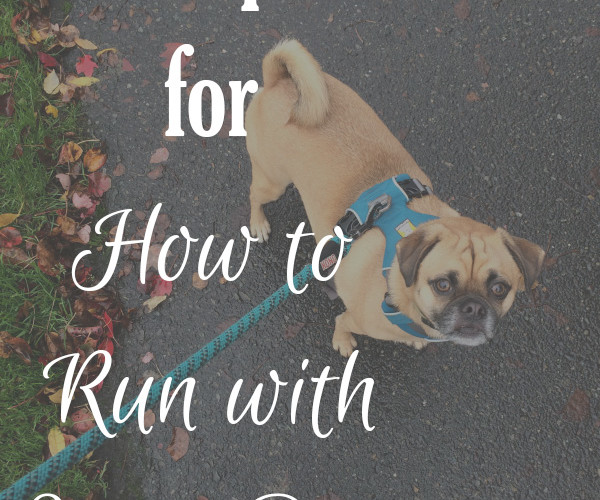 9 Tips for How to Run with Your Dog