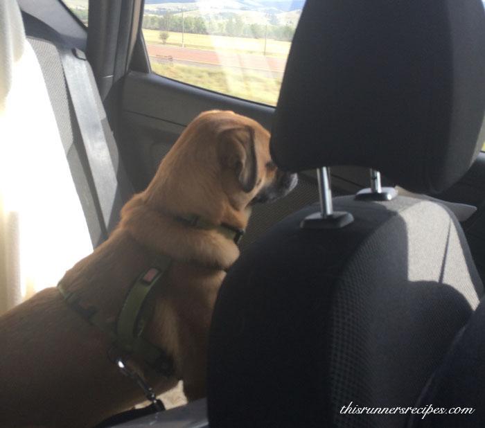 Charlie road trip
