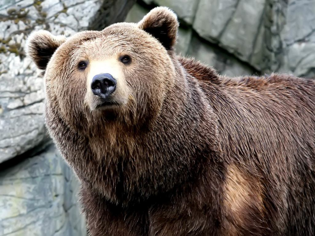 As adorable as bears are, I don't want to meet them on my run.