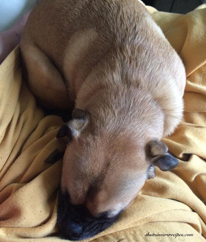 Charlie napping