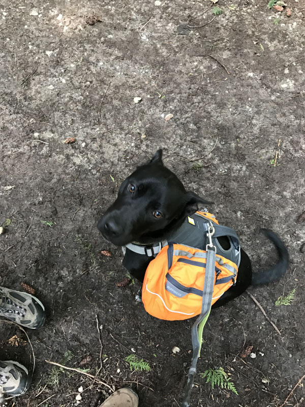 The First Hike of Spring