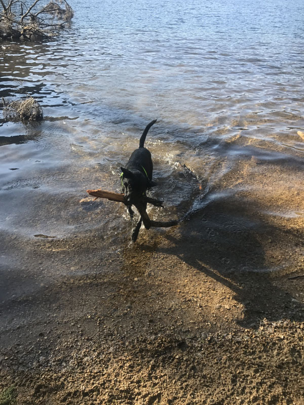 The Making of an Adventure Dog