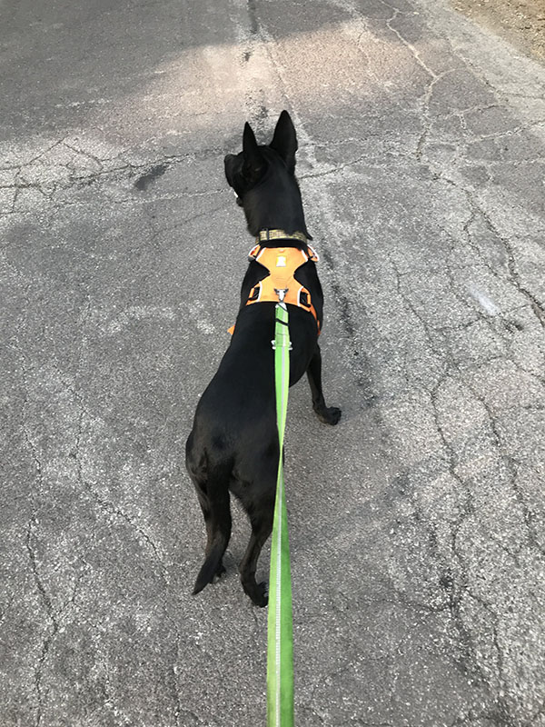 Mile Markers: Dog Miles